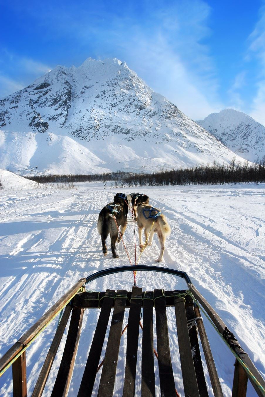 Dog sled tour, Tromso