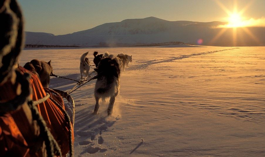 Dog sled tour, Tromso, Norway