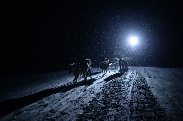 Polar night, dog-sledding, Svalbard
