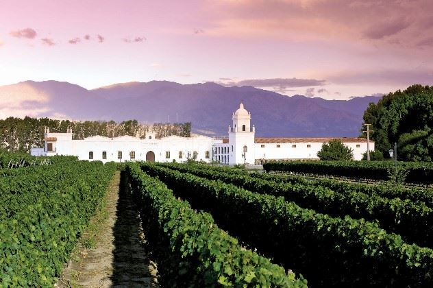 Vineyards, Patios De Cafayate, Argentina