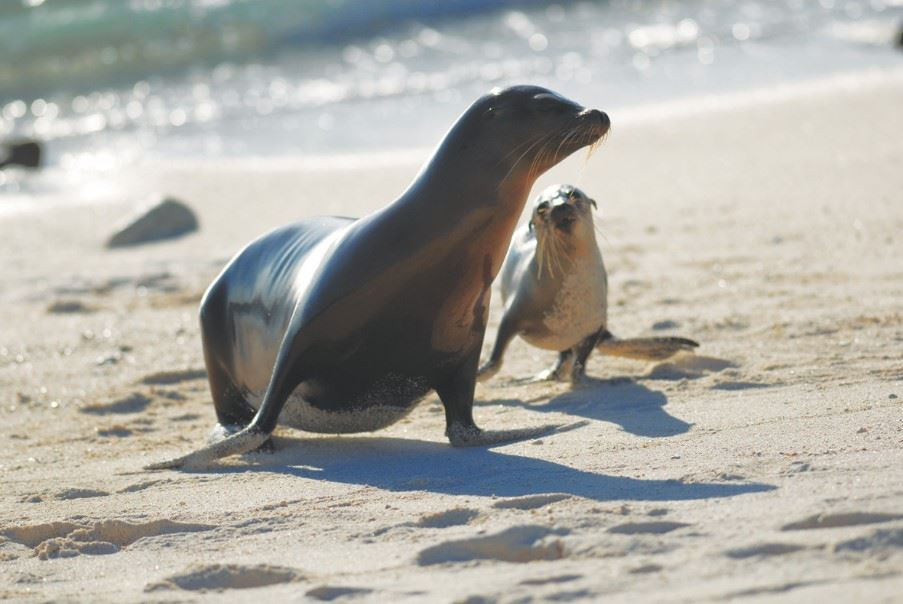 Sea Lions, The Galapagos Islands