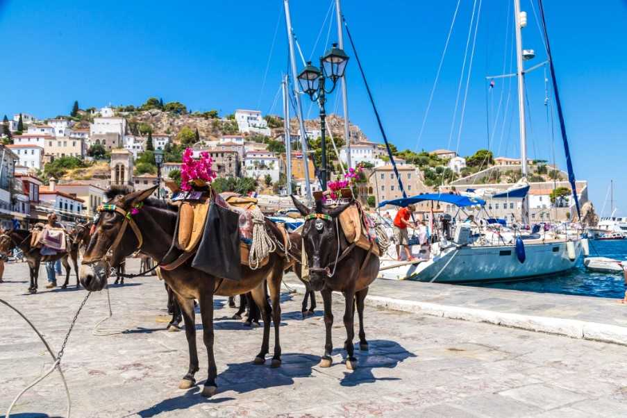 The local transport on Hydra
