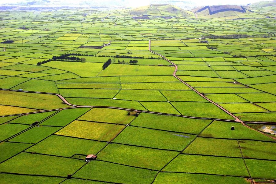 Green pastures of Terceira
