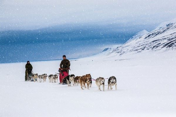Dog sledding on a wintry Landscape, Svalbard