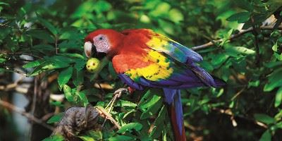 Macaw, South America