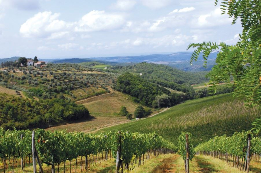 Tuscan countryside and vineyards