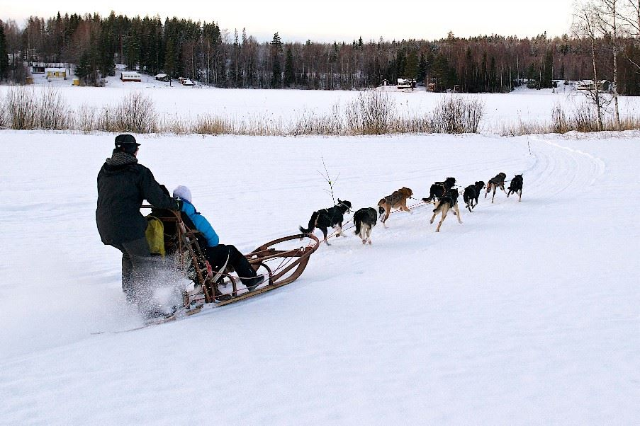 Dog sled tour, Swedish Lapland