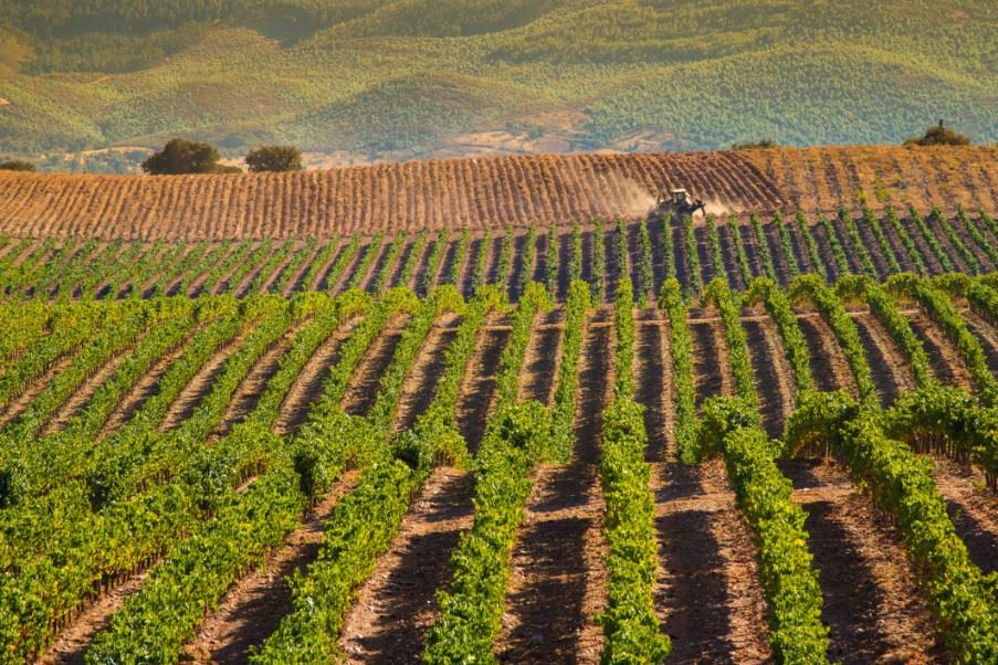 Vineyards in Alentejo