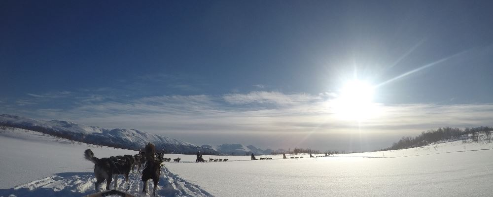 Dog sledding in Tromso, Northern Norway