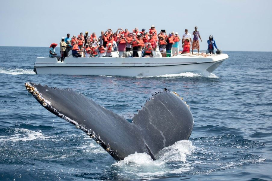 Whale Hunting, Sao Miguel