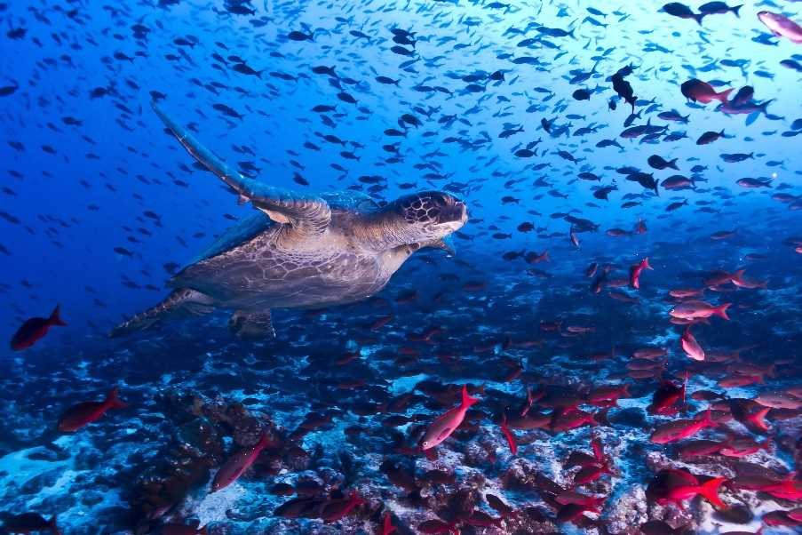 Snorkel or scuba dive to see the amazing marine life