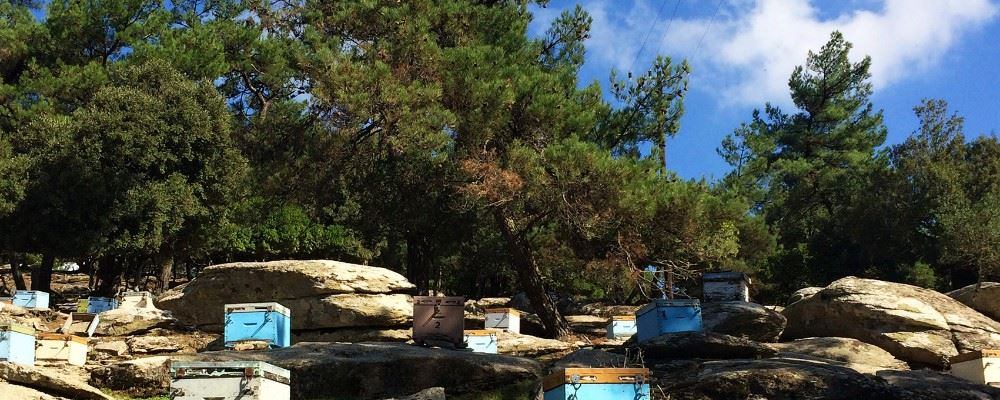 Bee hives on Ikaria, Greece