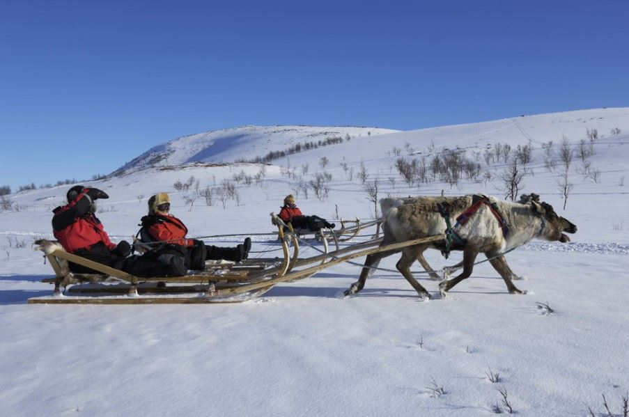 Reindeer sledding, Swedish Lapland