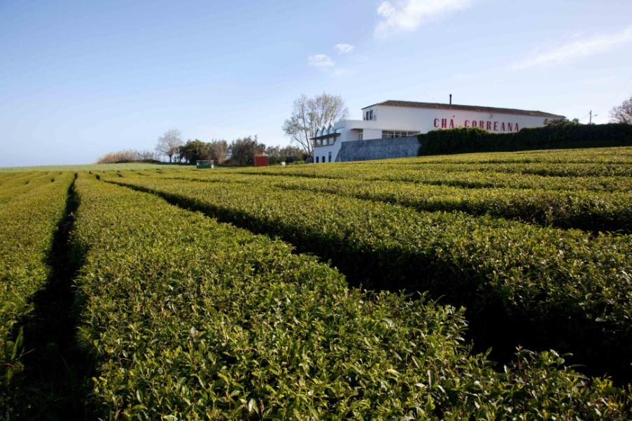 Gorreana tea factory, Santa Barbara