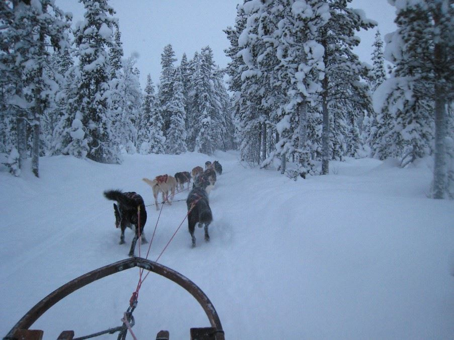 Dog sled tour, Harads, Swedish Lapland