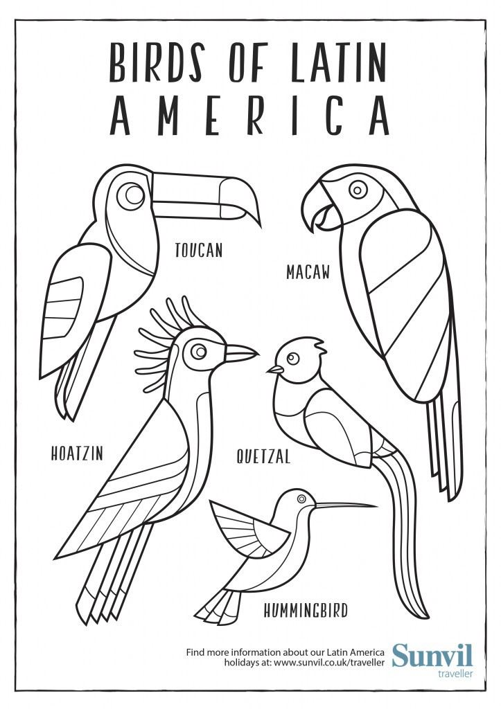 Birds Of Latin America