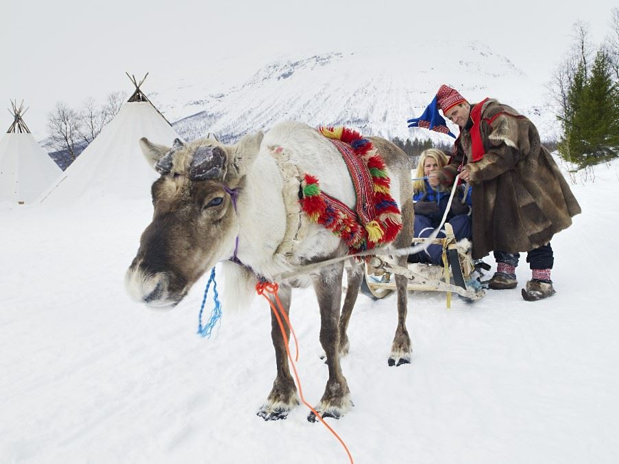 Reindeer sled tour, Tromso, Norway
