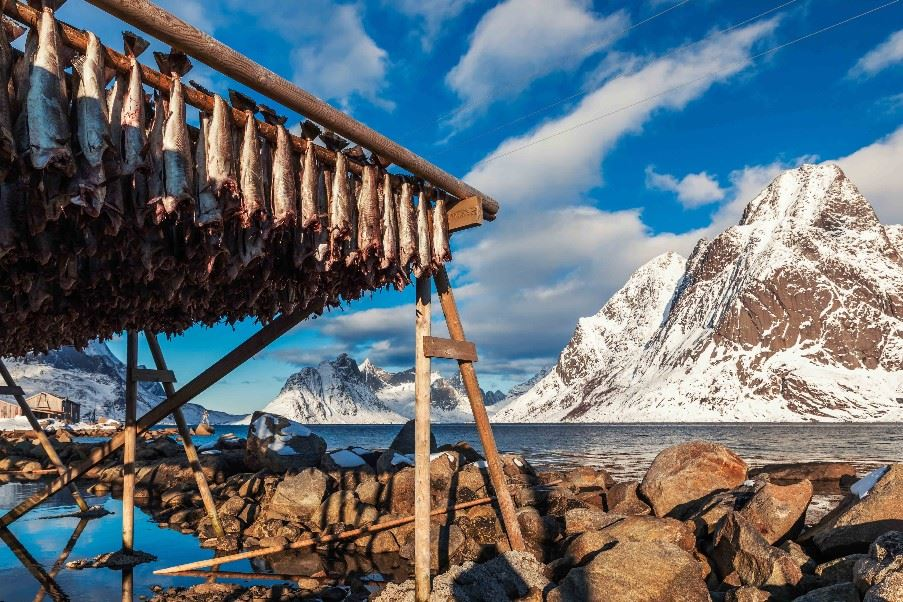 Fish Drying, Lofoten Islands, Norway