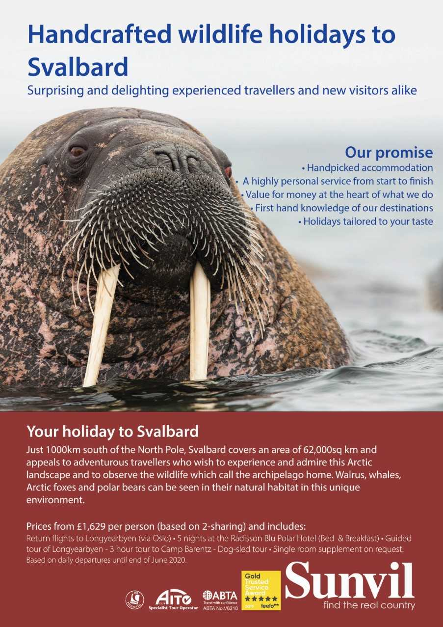 Example - Wildlife holiday destination poster