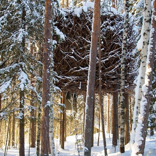 Birds Nest, Treehotel, Swedish Lapland