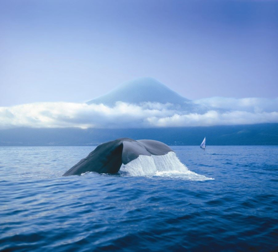 Whale watching, Sao Miguel