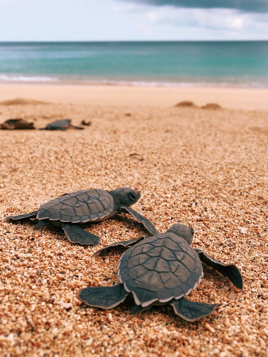 Turtles, Principe