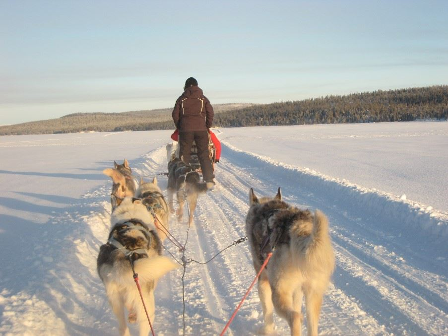 Trapline dog-sled tour